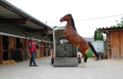 Horse trailer loading problems?