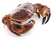 Ireland's Reliable Shellfish Suppliers